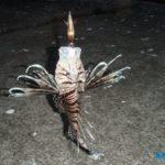 磯遊びで遭遇する危険生物~刺されたり噛まれたりした際の対処マニュアル