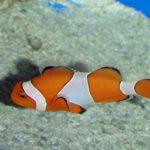 海水魚の淡水浴の方法~寄生虫を安全に駆除するために