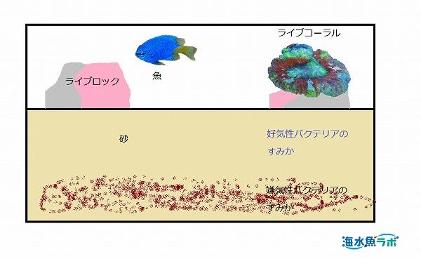 砂を分厚く敷き好気性・嫌気性両方のバクテリアのすみかを作る図