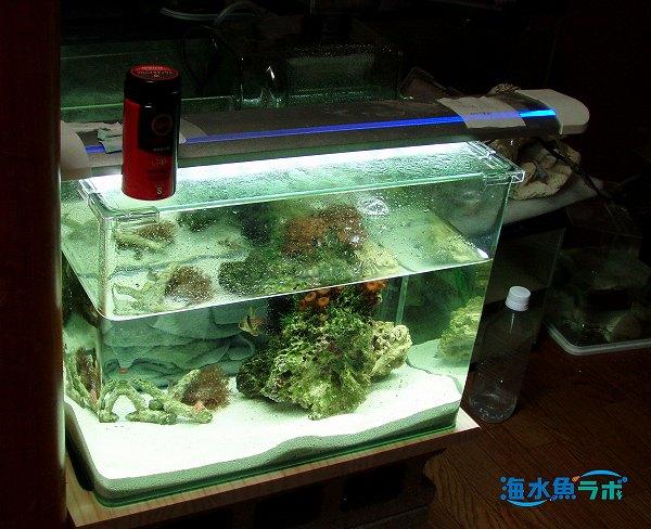 マンジュウイシモチ小型水槽での飼育例。水槽はアクアシステムのニューアール