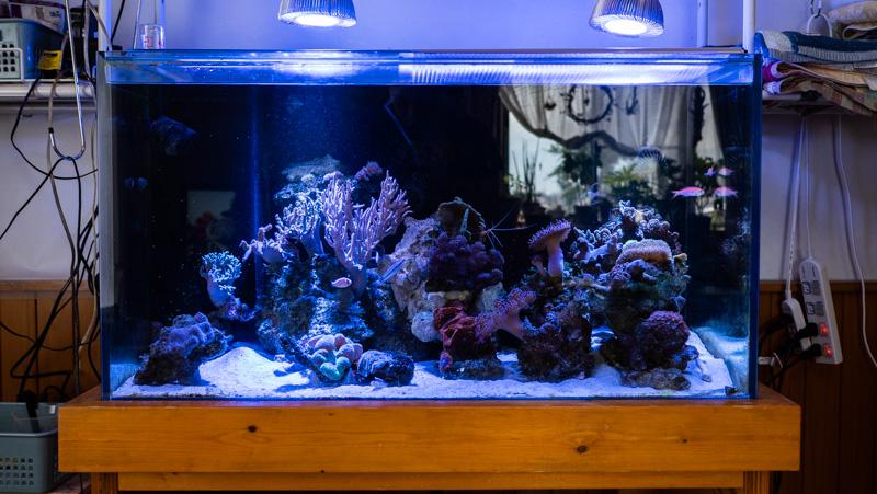 海水魚ラボ管理人(椎名雅人)90cmオーバーフロー水槽