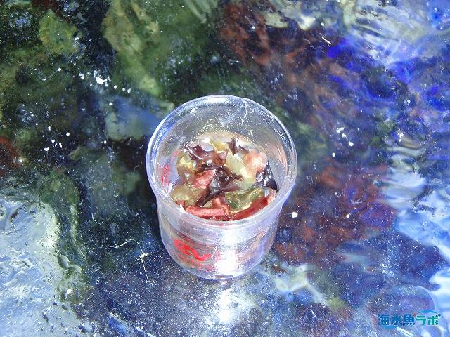 アクアリウムシステムズ アラカルトシリーズミックスド フレーク マキシを海水でふやかす