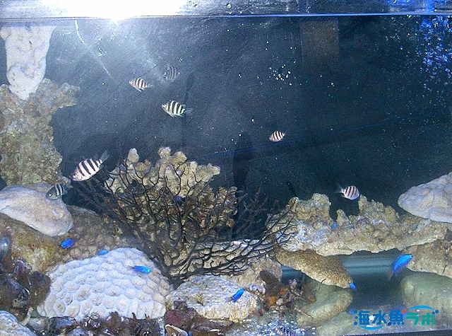 魚水槽の一例