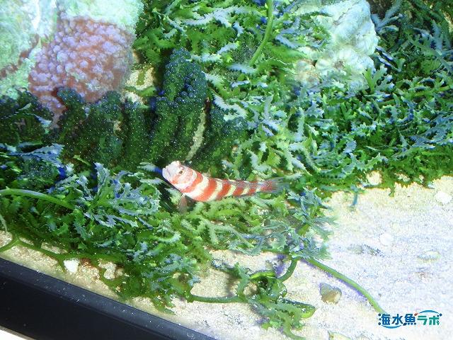海藻水槽の一例