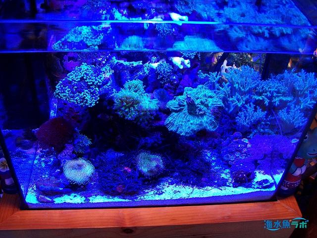 45cm水槽(サンゴ)