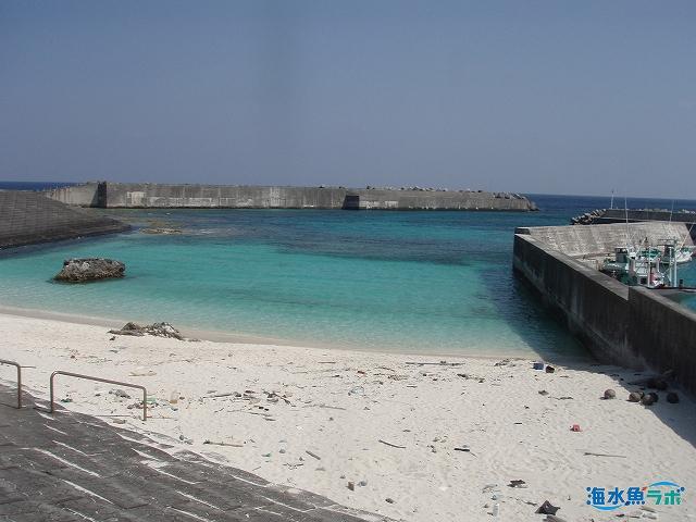 琉球列島の海には多くの種のウツボが生息する