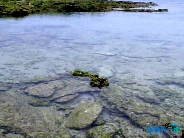 ハナビラダカラガイの故郷、奄美諸島のタイドプール