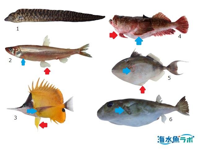 魚の鰭の名称と位置について | 海水魚ラボ